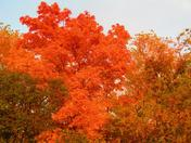 Bree Picls fall colors