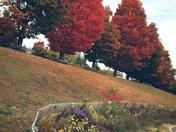 Pretty scenery at Malone rec park