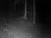 Is it a Vermont Eastern Mountain Lion?