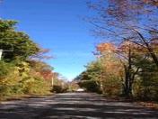 leaves falls