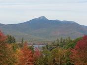 Mountain chakura n.h.