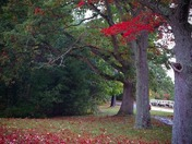 FALL IMAGES