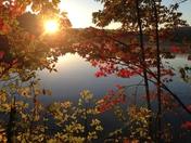 Walden Pond Foliage