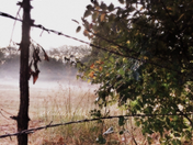 Fog Settling Across the Countryside