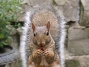 I love nuts!