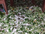 hail in New Salisbury