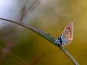 Fuzzy Butterfly