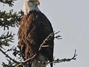 Nova Scotia wildlife