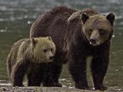 Mom with Cub