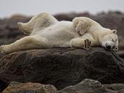 5a. Polar siesta