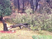 tree down in front yard last eve