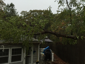 tree down on house