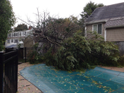 storm damage from last night.