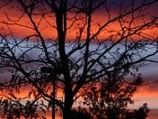 tonoight's amazing sunset
