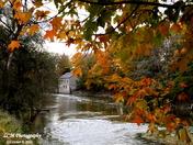 Through Autumn Leaves