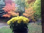 Fall 2014 in KC