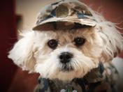 Soldier Buddy