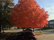 Fall tree!!!