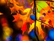 Autumn's Matchless Splendor