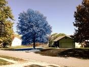 Royals blue October leaves
