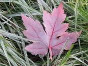 Ontario,Canada Maple Leaf