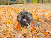 Strolling out in the Fall leaves