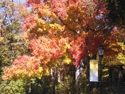 Fall at Calvert School
