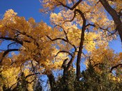 Fall Colors at Ojo Caliente
