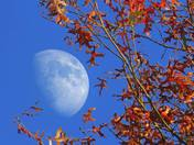 Moon and Autumn leaves