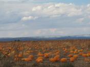 Pumpkin Patch in Estancia, N.M