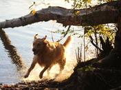 Fraser River Girl Thrives!