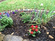 Hail in my pretty flowers