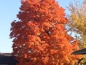 Last of fall / from Karen Wood at Superbia Retirement