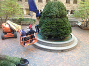 courthouse Xmas tree almost complete