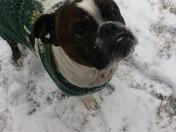 Sully enjoying the snow!