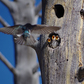 Wildlife Winner - Yellowstone National Park
