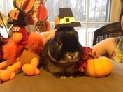 Even Thumper is ready for Thanksgiving!
