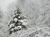 Snow On Chance Pond Brook