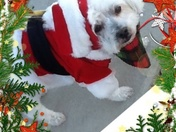 Rescued dog!!