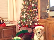 a couple of my elves...  CJ on left 9 mo old.. Kody is the beagle and is about 1