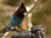 Nikon Lens, Brings Wildlife in Close