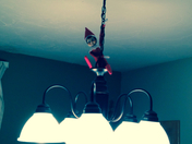 chippy scout just hanging around