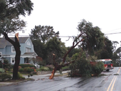 Tree down on Pine Ave PG