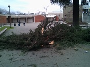Huge branch fell 25 feet out of the tree at Modesto high school