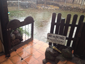 flooded backyard