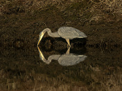 Heron's reflection