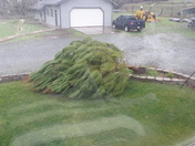 Granddaughter's tree didn't make it