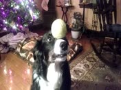 Maggie and her tennis ball