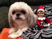 Sonny The Elf