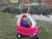 Hope wanted a real tree for christmas